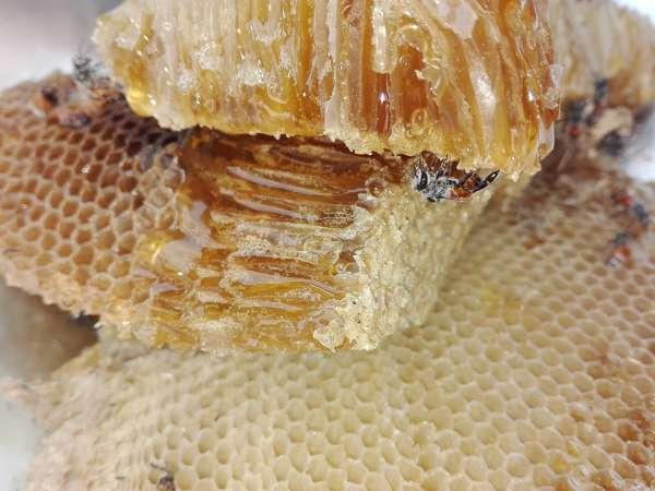 Женьшень с медом для потенции