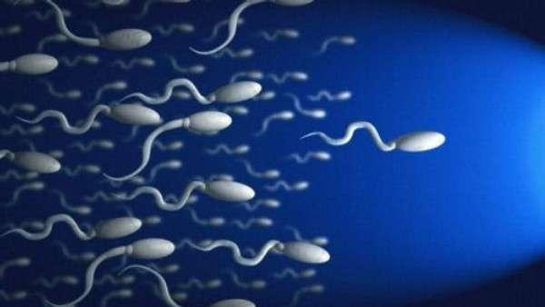 Как варикоцеле влияет на репродуктивную функцию